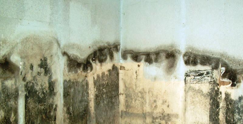 Средства от плесени и грибков для жилых помещений